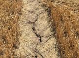 Hitze und Dürren mindern Getreideproduktion