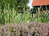 Gartenkalender: Das ist zu tun im Juni