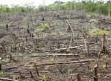 Regenwaldabholzung im Amazonasgebiet wieder gestiegen