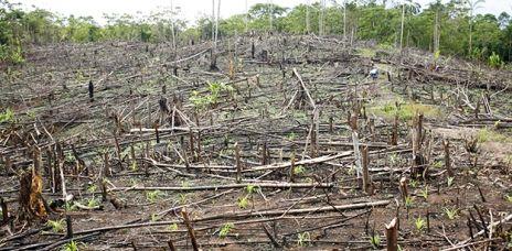 Immer mehr Wald verschwindet