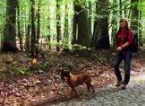 Traumziele für Outdoortouren mit Hund