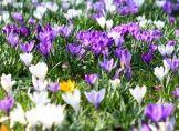 Kalendarischer Frühlingsanfang – nicht mehr am 21 .März?