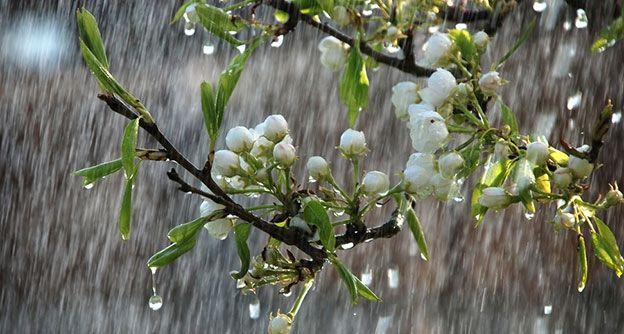 Frühling mit Regen