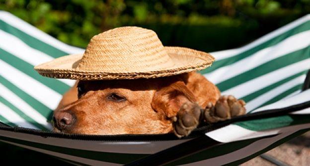 Hund-Hängematte-Hitze