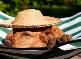Reisen mit Haustieren wird innerhalb der EU erleichtert