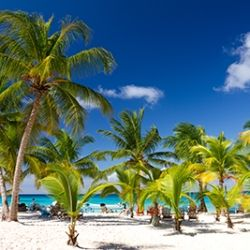 Palmen Strand Dominikanische Republik