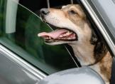 Die Schattenseite des Sommers: Hitzeschutz für Haustiere