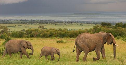 Elefanten Safari Afrika