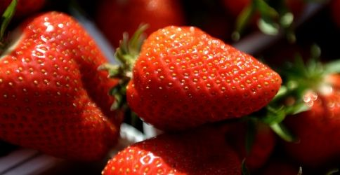 Im März die Erdbeeren ausputzen