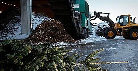 Weihnachtsbäume werden in Hamburg entsorgt