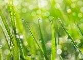 Regen - das komplexe lebenswichtige Elixier