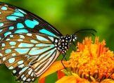 Milder Winter nützt Schmetterlingen