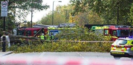 Frau in London von umgestürztem Baum getötet