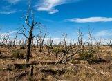 40 Millionen tote Bäume in Kalifornien
