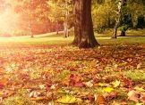 Kleine Verwirrung beim astronomischen Herbstbeginn