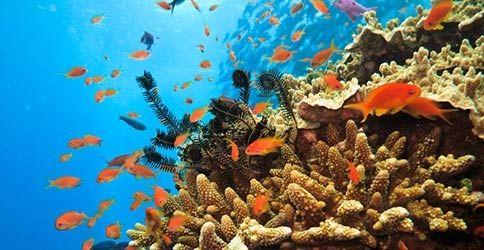 Graet Barrier Reef