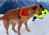Lawinensuchhunde im Einsatz