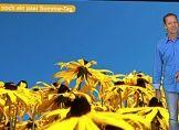 Nach Herbst-Schlag folgen Sommer-Tag´