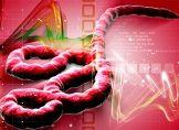 Zahl von Ebola-Fällen schnellt wieder hoch