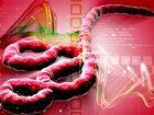 Geheimprojekt gegen Ebola