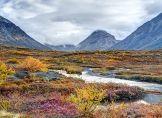 Arktische Tundra-Pflanzen erhöhen Klimawandel