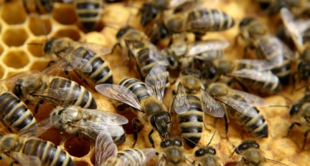 Fleißige Bienchen!