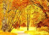 Der Herbst - Freud und Leid einer Jahreszeit