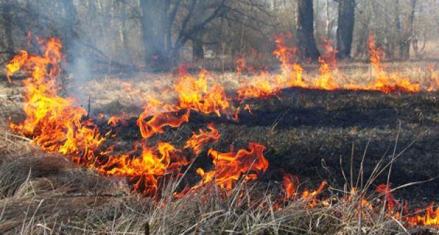 Die Waldbrandgefahr ist sehr hoch