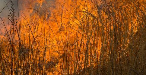 Buschbrand, Feuer