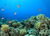 Warnung vor Hitzetod der Korallenriffe