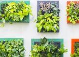 So wässern Sie Pflanzen in Hydrokultur richtig