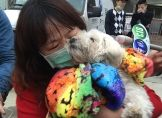 Kleiner Hoffnungsschimmer nach Beben in Taiwan