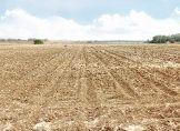 Bauern warten auf Landregen