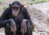 Affenhitze! Spezialfutter für Zootiere in Rio