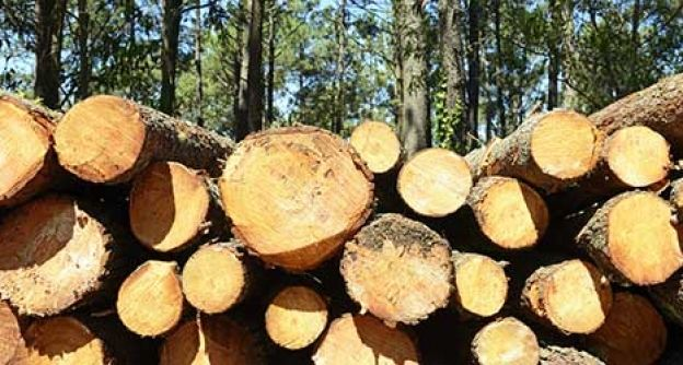 Holz liegt im Wald
