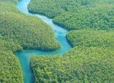 Brasilien will Regenwald aufforsten