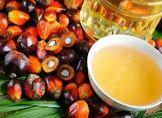 Palmöl: Ruf als Klimakiller, aber kaum ersetzbar