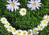 Frühling mit kleinem Schönheitsfehler
