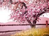 Anhaltende Frühlingsgefühle erst im April!