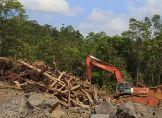 Warnung vor Untergang der Tropenwälder