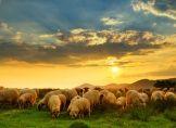 Schafskälte und Spätfröste