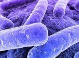 Trinkwasser von Winnipeg mit E.coli-Bakterien verseucht