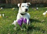 Ihre Frühlingsbilder bei uns!