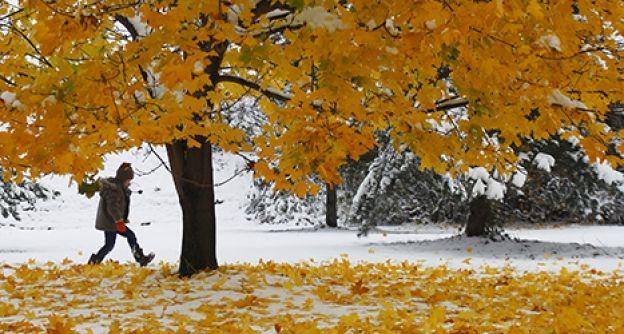 Laub im Schnee (dapd)