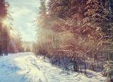 Wohin hat sich der Winter verzogen?