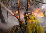 Australien: Verzweifelter Kampf gegen Buschbrände